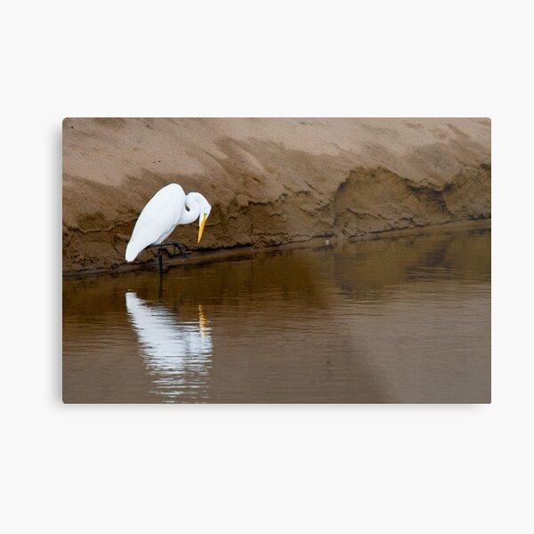 Great Egret Fishing Metal Print