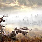 Wooden Life by Igor Zenin