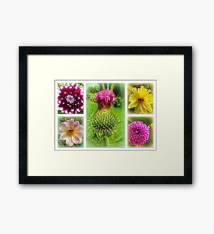 Blooming Marvellously! Framed Print