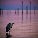 Twilight Heron by Jonicool