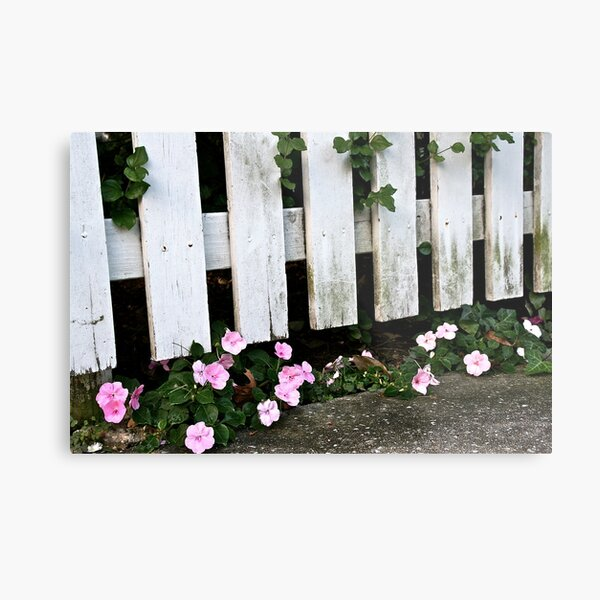 Pink Among the Pickets Metal Print