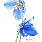 Blue Poppy Sails in the Wind by Pat Yager