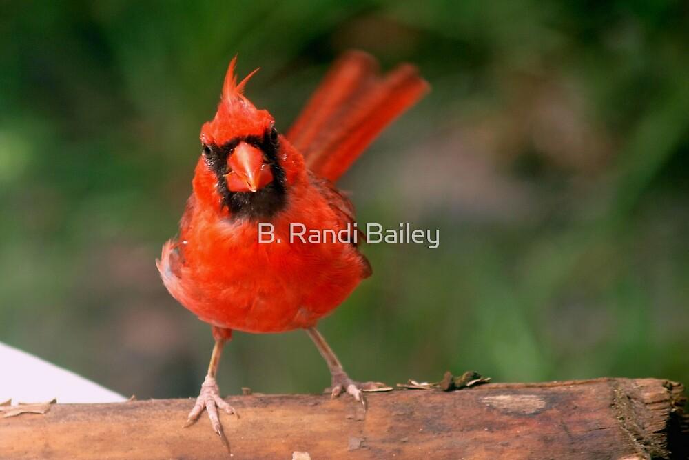 Eye contact with a cardinal by ♥⊱ B. Randi Bailey