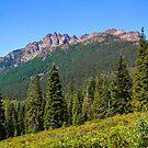 Sierra Buttes by Barbara  Brown