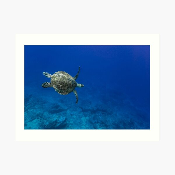 A turtle in the blue Art Print