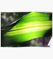Sun shining through green leaf - 2 Poster