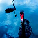 Swan Song Ltd by jesskato
