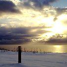 """Sunburst in the Snow""  by technochick"