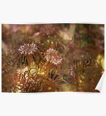 Green polyp abundance Poster