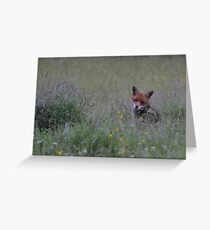 Fox in the Rain Greeting Card