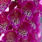 Flower by RocketDesigns