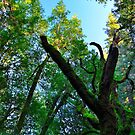 Dead Tree by VincenzoL