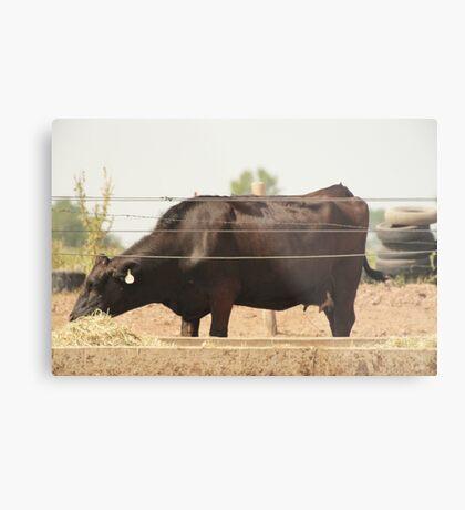 Black Cow and Tires Metal Print