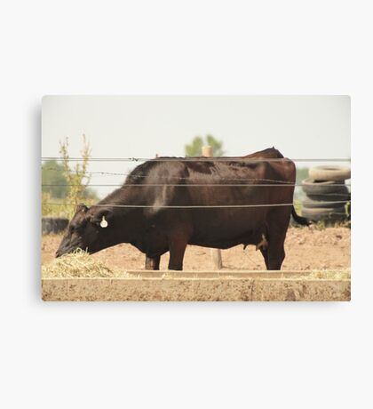 Black Cow and Tires Canvas Print