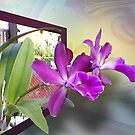 2 Orchids 4U by Ginny Schmidt