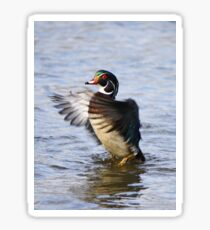 The little wood duck that could Sticker