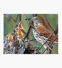 Can we  please have some more, we are still hungry ! Photographic Print