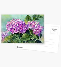 Pink Hydrangeas Postcards