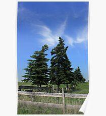 Two trees on the Alberta prairies Poster