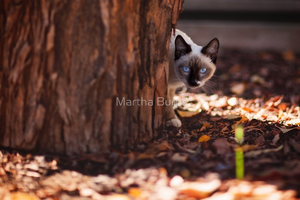 Blue eyed kitty by Martha Burns
