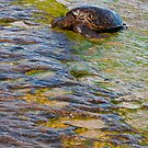 Turtle Tanning by BrianDawson