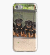 Six Rottweiler Puppies Lined Up On A Swing iPhone Case/Skin