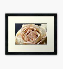 Paper , Velvet or Real Rose ? Framed Print
