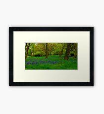 Bluebell Glade Framed Print