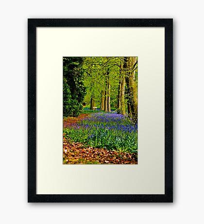 Jenny's Walk Framed Print