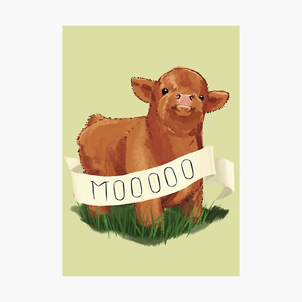 Baby Highland Cow Photographic Print