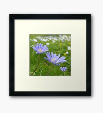 Spring again Framed Print