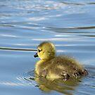 First Swim... by KUJO-Photo