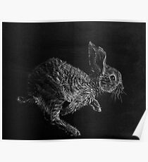 Young White-tailed Jack Rabbit Poster