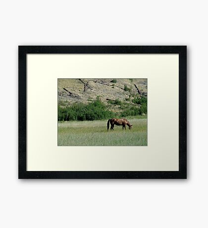 HORSE IN A MONTANA PASTURE Framed Print