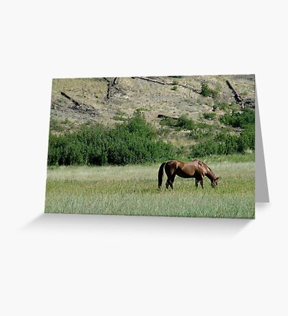 HORSE IN A MONTANA PASTURE Greeting Card