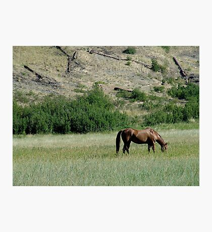 HORSE IN A MONTANA PASTURE Photographic Print