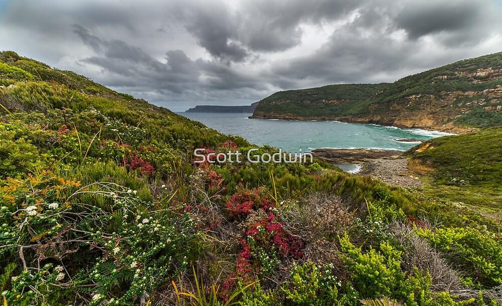 Wildflowers, Tasman Peninsula, Tasmania by Scott Godwin