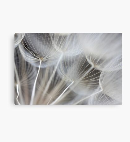 covered in inverted umbrellas Canvas Print