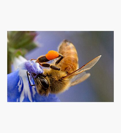 Working Bee Photographic Print