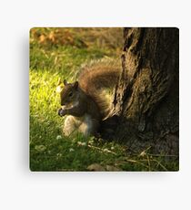 Brown Squirrel Canvas Print
