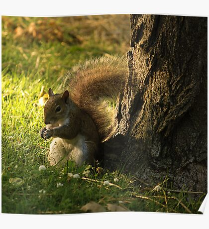 Brown Squirrel Poster