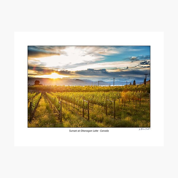Sunset at Okanagan Lake near Penticton with a vineyard in the foreground, British Columbia, Canada Photographic Print