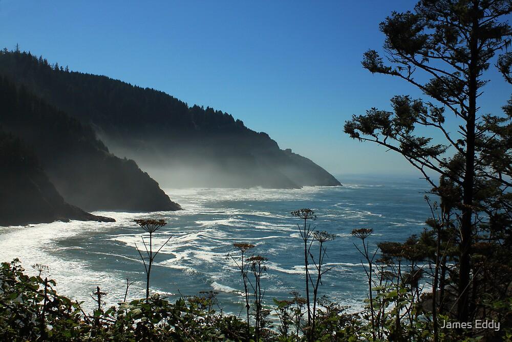 Misty Coast at Heceta Head by James Eddy