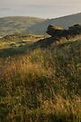 North Hill, The Malvern Hills by Cliff Williams