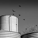Black Cockatoos and Water Tanks by Mick Kupresanin
