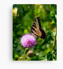 Swallowtail Canvas Print