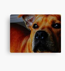 Staffordshire Bull Terrier. Canvas Print