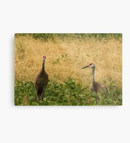 Pair of Sandhill Cranes Metal Print