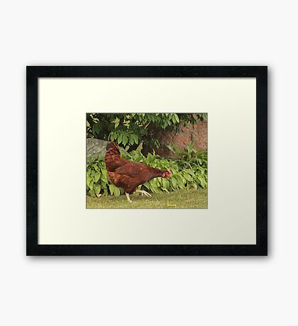Red Rock Chicken Framed Print