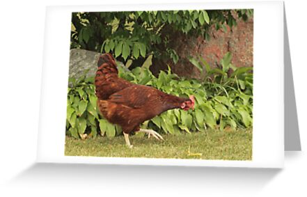 Red Rock Chicken by Thomas Murphy